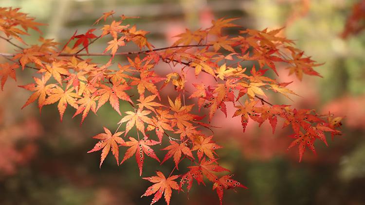 Inspiraatiota kodin värimaailmaan löytää vaikka luonnosta.